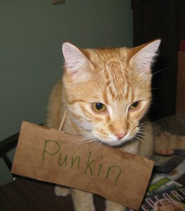 Punkin's Name Tag